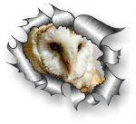 A4 Size Ripped Torn Metal Design With Barn Owl Motif External Vinyl Car Sticker 300x210mm